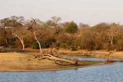 Landscape in the Kruger National Park with its wild nature perfect for safaris in August, South Africa Royalty Free Stock Photo