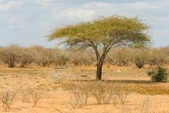 Landscape in Kruger National Park, South Africa. Landscape in Kruger National Park in South Africa Stock Photo