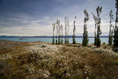 Landscape in La Calafate, Argentina. Blue lake in La Calafate, Argentina stock photos
