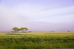 Landscape in la Pampa , Argentina Royalty Free Stock Image