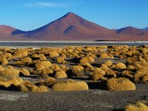 Landscape at Laguna Colorada. (Bolivia Royalty Free Stock Photography