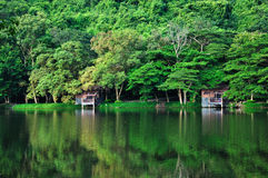 Landscape of lake. Beautiful landscape of lake in the forest stock images