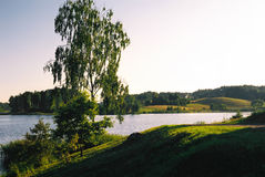 Landscape with a lake and birch tree Stock Photography