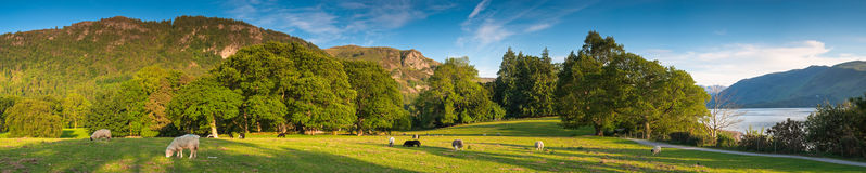 Landscape, Lake District, UK. Rural landscape with healthy livestock Lake District, UK Stock Photo