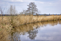 Landscape with a lake in early springtime Stock Photos