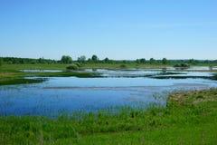 Landscape lake, grass, field Royalty Free Stock Photo