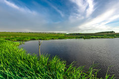 Landscape with lake and green summer meadow Stock Image