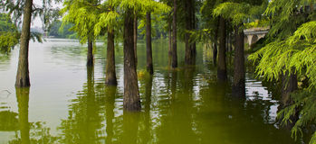 Landscape by the lake with green trees. Near lake shore,some green trees grow in the lake Stock Photos