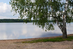 Landscape with lake. Stock Photos