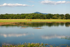 Landscape with lake and pasture. Royalty Free Stock Image