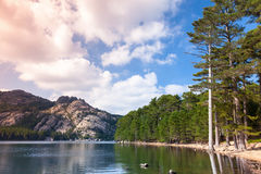 Landscape with lake, pine trees and mountains Stock Photography