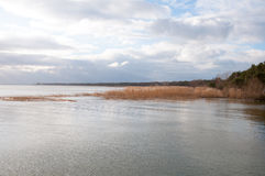 Landscape of lake and reeds Royalty Free Stock Photography