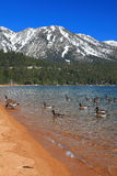 Landscape of Lake Tahoe in California Stock Photography