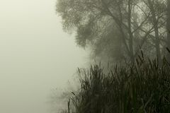 Lake with fog. Landscape of lake, trees and fogs in fog Royalty Free Stock Photo