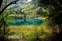 Landscape of lake and trees Royalty Free Stock Image