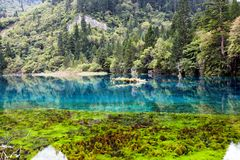 Landscape of lake and trees Royalty Free Stock Photography