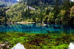 Landscape of lake and trees Stock Images