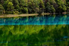 Landscape of lake and trees Royalty Free Stock Images