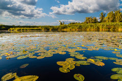 Landscape at the lake with water lilies Royalty Free Stock Photos