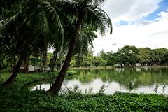 Landscape of lakeside view with palm trees in Lumphini Park in B royalty free stock photo