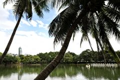 Landscape of lakeside view with palm trees in Lumphini Park in B royalty free stock image