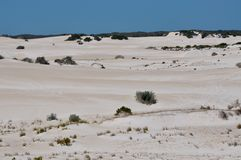 Landscape of the Lancelin Sand Dunes: Western Australia Royalty Free Stock Photography
