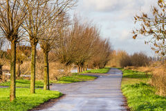 Landscape with a lane surrounded by willows Stock Images