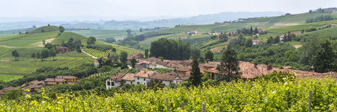Landscape in Langhe (Piedmont) Royalty Free Stock Images
