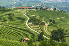 Landscape in Langhe (Piedmont) Royalty Free Stock Photo