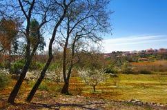 landscape lantligt Royaltyfri Bild