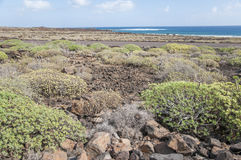 Landscape of Lanzarote Royalty Free Stock Photography