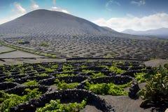 Vineyard in Lanzarote.Landscape of Lanzarote Royalty Free Stock Photo