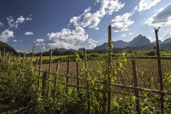 Landscape in Laos Stock Image