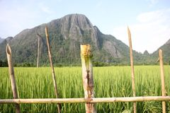 Landscape Laos. Photo image with mountain and rice field Royalty Free Stock Photo