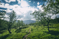 Landscape in Lapland, Sweden royalty free stock image