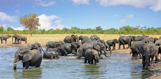 Landscape of a large herd of elephants in a waterhole with a beautiful blue cloudy sky in Hwange NationalPark, Zimbabwe stock photography