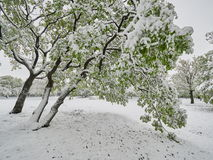 Landscape with late snow in spring in Dobrogea, Roman Royalty Free Stock Photos