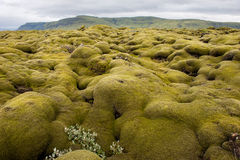 Landscape, lava field covered by moss, Iceland Royalty Free Stock Photography