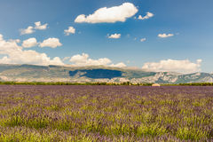 Landscape of a lavander field. With a building and mountains, in background royalty free stock photos