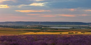 Landscape in a lavender field at sunset. Scenic colorful panorama in a blooming lavender field at sunset royalty free stock photos