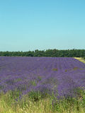 Landscape and lavender Royalty Free Stock Images