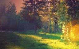 Landscape lawn for sunbathing in the forest shadows and Golden light spruce pine bokeh royalty free stock photo