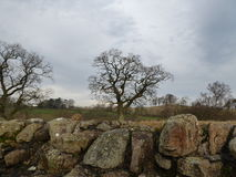 Landscape of Leafless Winter Trees. A scene of winter Leafless trees with hills in the background and a stone wall in the foreground and a low winter cloudy sky Stock Photos