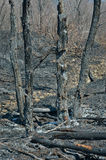 After forest fire 12 Royalty Free Stock Photos