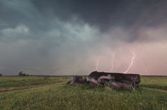 Landscape with lightning striking behind dead tree trunk Stock Images