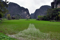 Karst formations and rice fields in Ninh Binh, Vietnam Royalty Free Stock Images