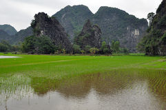 Karst formations and rice fields in Ninh Binh, Vietnam Stock Images