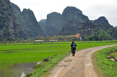 Landscape with limestone towers and rice fields. Vietnam Stock Image