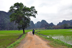 Landscape with limestone towers and rice fields. Vietnam Royalty Free Stock Photos
