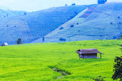 Landscape of the lined Green terraced rice field Stock Photography